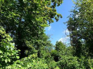 wildlife, nature, trees